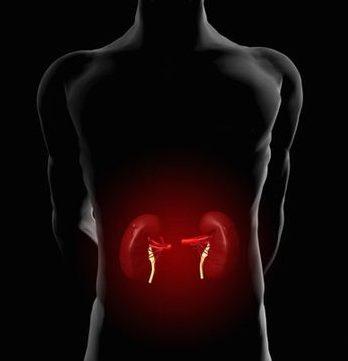 养生:5个饮食习惯最伤肾 4食物补肾养肾