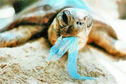 塑料污染 威胁海洋生态环境