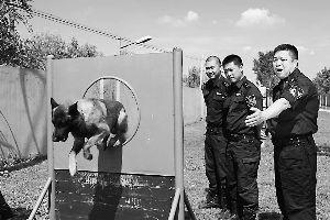 由于动物的天性,在大人流量和嘈杂的地方很容易产生畏惧情绪,降低工作能力,公交总队警犬工作大队针对这种情况,对专项警犬进行了上千次训练。