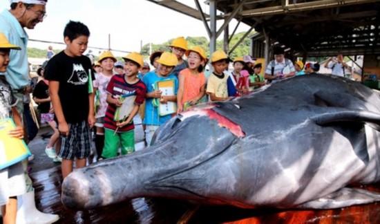 日本捕鲸团体邀请小学生参观鲸鱼解剖(网页截图)