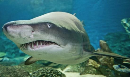 香港最大公园馆落户亚洲海洋鲨鱼视频教学地维图片
