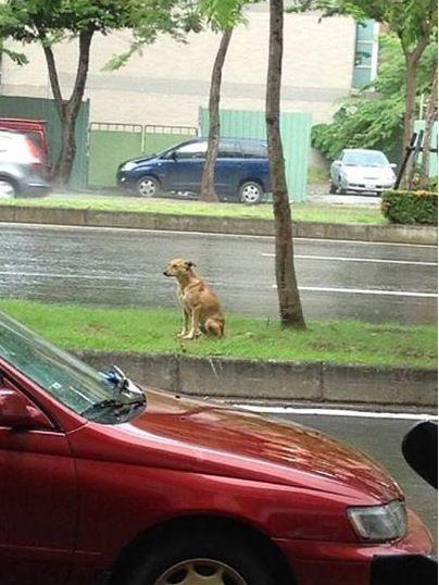 小狗遭遗弃路边风雨无阻等2年盼主人接回(图)