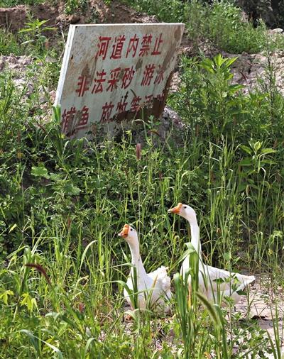 北京14岁男孩突沉河中溺亡 疑河沙挖采惹祸(图)