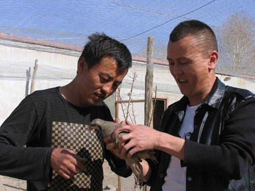 新疆伊吾瓦里斯江:逆境中奋起的儿子娃娃(图