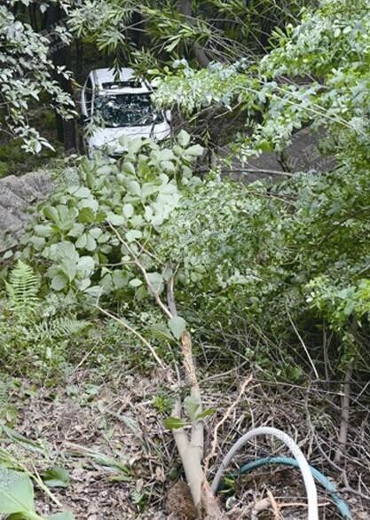 温州车挂树上_温州一越野车挂树上网友调侃变形不小心卡着