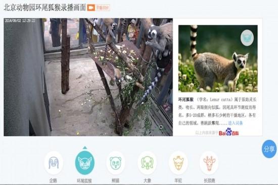 外媒热议:北京动物园携手百度打造虚拟动物园