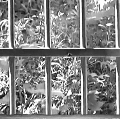澄迈福岭石场管理人员值班室内遭枪击身亡