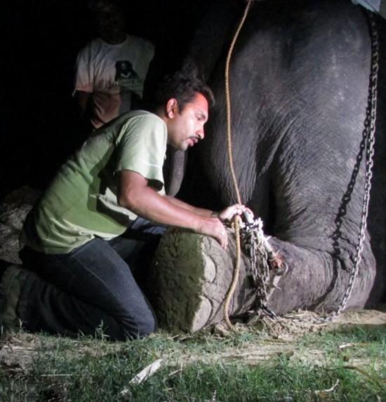 高清组图:印大象被虐待50年获救后感动流泪【3】