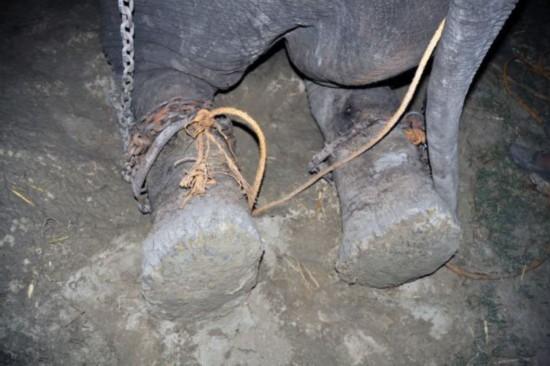 高清组图:印大象被虐待50年获救后感动流泪【4】