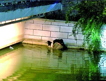 小伙救爱犬站河中托举2小时救援者称狗会游泳(图)
