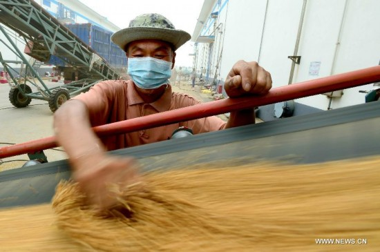 China's summer grain output hit a record high of 136.60 million tonnes in 2014, up 3.6 percent from last year, said the National Bureau of Statistics (NBS) on Monday.