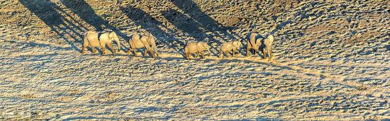 澳摄影师百米高空拍象群沙漠唯美投影1