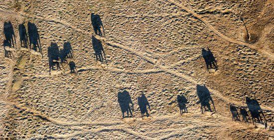 澳摄影师百米高空拍象群沙漠唯美投影3