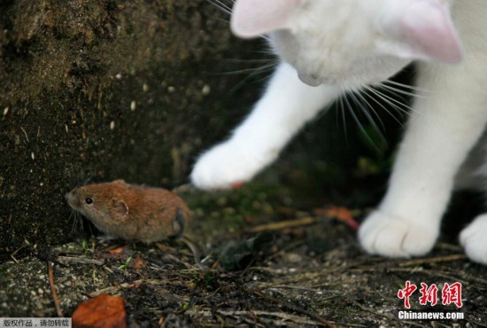 亚上演现实版 猫和老鼠图片