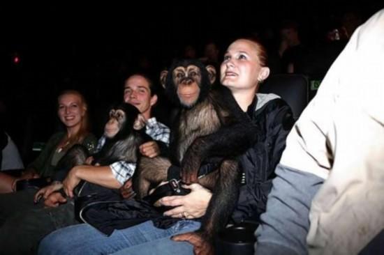 黑猩猩影院观看《猩球崛起》竖起大拇指称赞