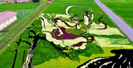 日本稻田种出仙女图案 栩栩如生唯美动人