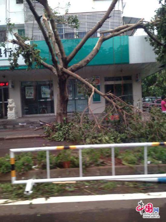 海口/台风过境后的海口:校车被吹侧翻 工地塔吊欲坠【11】