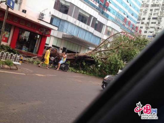 海口/台风过境后的海口:校车被吹侧翻 工地塔吊欲坠【18】...