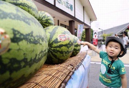 日本巨型西瓜上市 重20公斤售价约250元