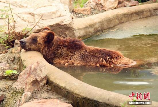 动物园工作人员为园中的小动物们准备了冰块,水果冰坨,竹子棒冰,西瓜
