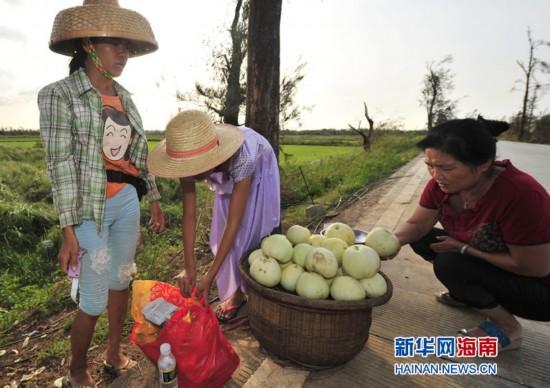 海南灾区坚强姐妹3天卖300斤甜瓜补贴家用