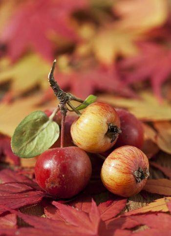 4种水果降脂食疗方推荐