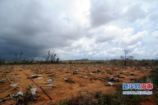 """海南翁田:超强台风""""威马逊""""灾后十日"""