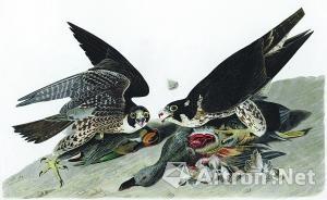 苏富比网上拍卖的《美国之鸟》(部分)