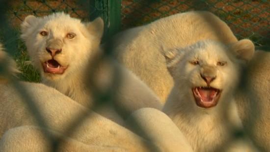 土豪国度:迪拜购物中心饲养珍奇动物