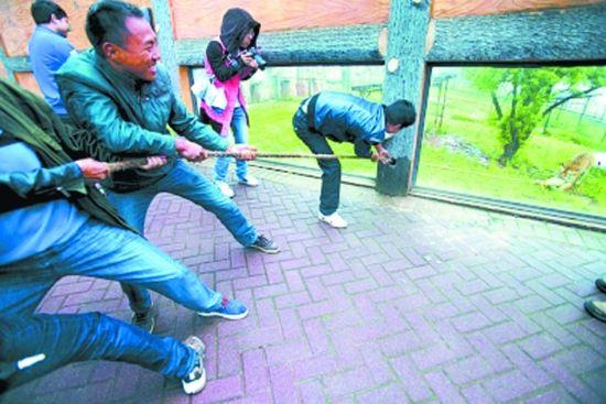 网友曝光天津动物园一老虎骨瘦如柴