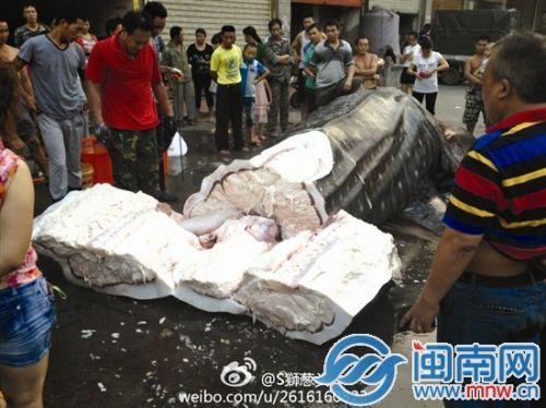 福建:2吨重鲸鲨切割后无人要 尸体被抛下海(图)