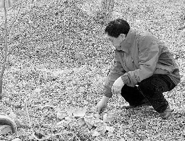 陈景顺在野外收集古瓷片。