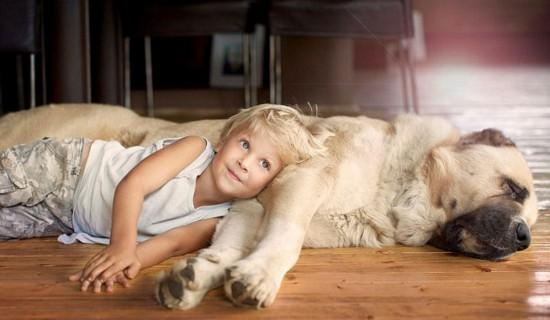小孩与动物温馨