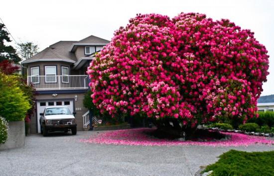 世界各地美丽的树