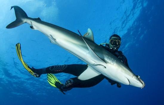 潜水向导水下催眠鲨鱼摆姿势合影