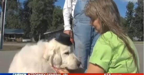 美国小镇选可爱小狗当镇长 报酬为一年狗粮
