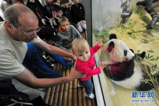 """""""福豹""""一岁啦!熊猫宝宝在维也纳的幸福生活"""