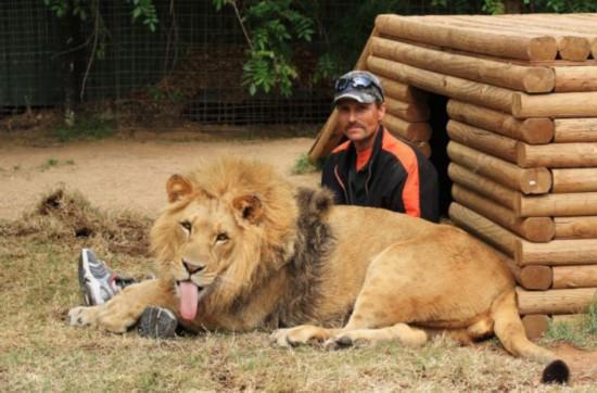美动物园雄狮和小狗形影不离成好伙伴【7】--陕西频道