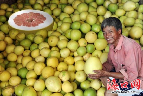 海南红肉蜜柚熟了 30万斤柚子四月已被预订