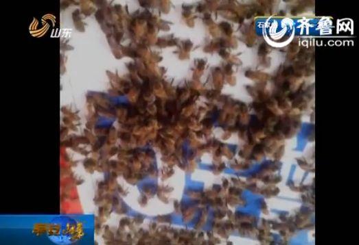 近日,在临沂河东区的一个加油站,一群蜜蜂不请自到,驻扎在加油站不走了。(视频截图)