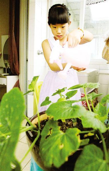 植物图鉴手绘师 家旭