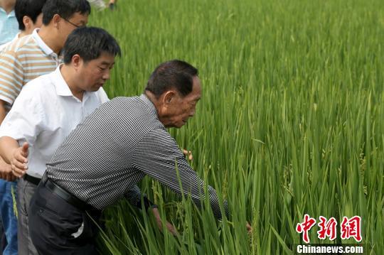 袁隆平:超级杂交稻可实现北方种植推广计划