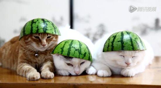 猫咪视频_日本爱猫人士上传\