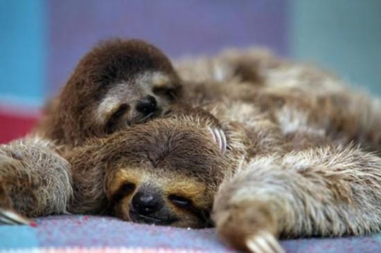 8张动物孤儿照片暖人心:袋鼠寂寞袋熊卖萌【3】