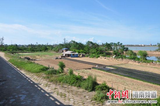 """海口南渡江畔种养业""""开发""""热或致水质污染"""