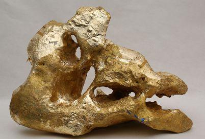 王清州雕塑作品《颅骨》a skull a 35cm×24cm×19cm石头 2014年