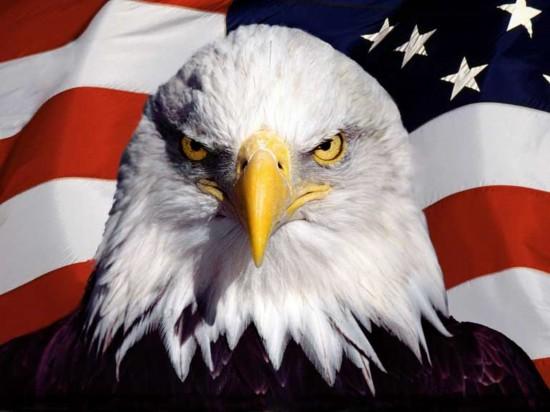 美国男人的鸟_在1782年被选定为美国国鸟.