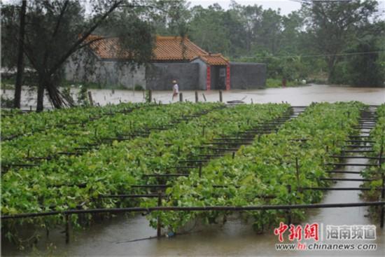 海口临近南渡江边的村庄房屋遭洪水淹水。 王辛莉 摄