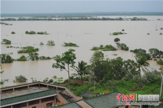 海口南渡江洪水将云龙镇1500亩大田洋淹没。 王辛莉 摄
