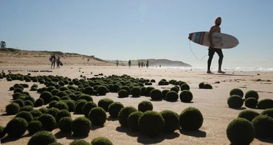 """悉尼海滩惊现大量神秘绿色""""海藻蛋"""""""
